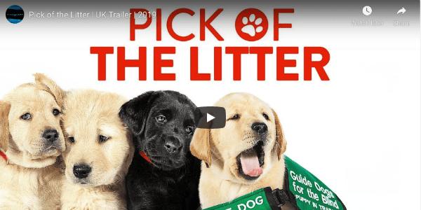Guide Dogs Documentary LongOnCuteness