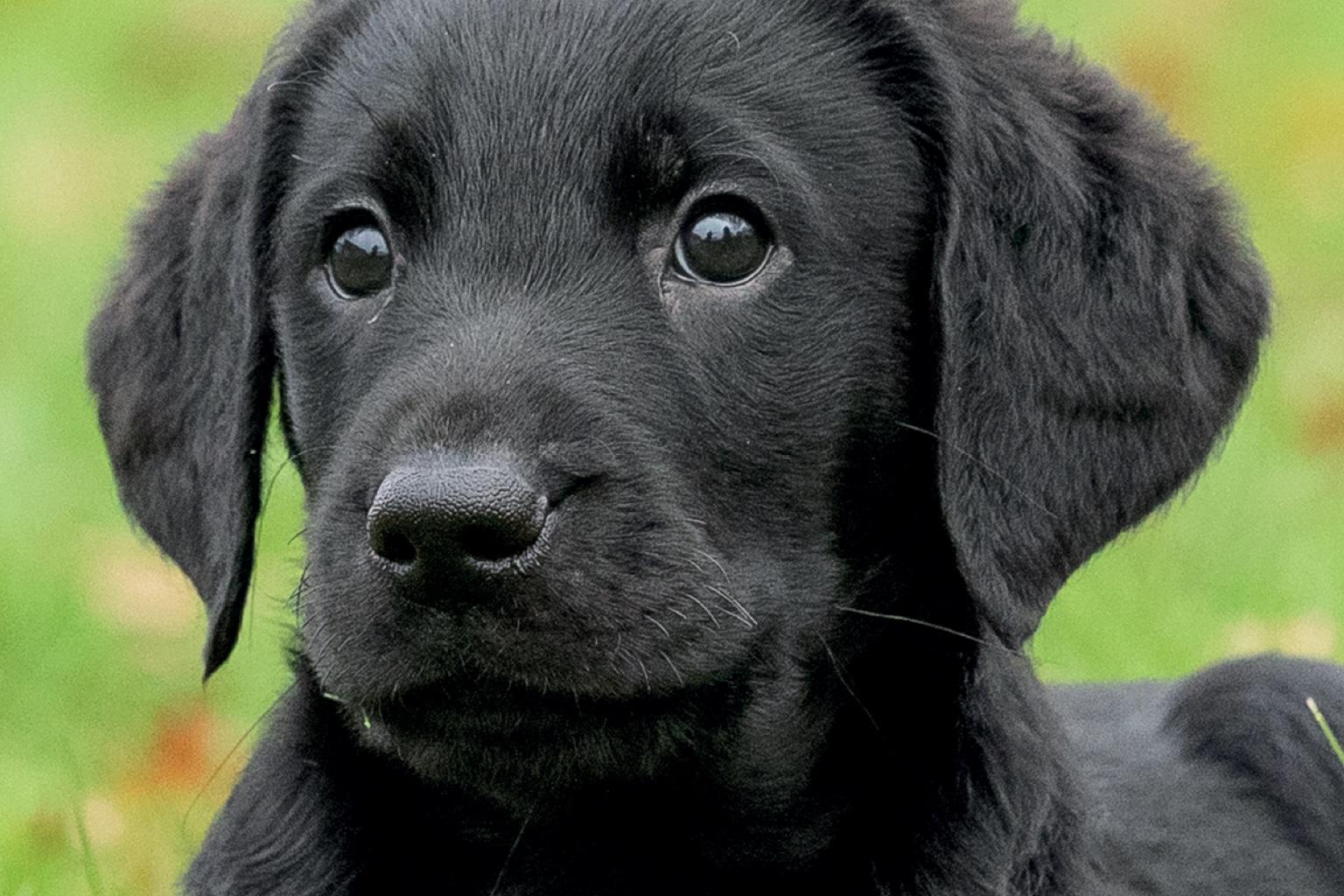 Sponsor a Puppy Lola