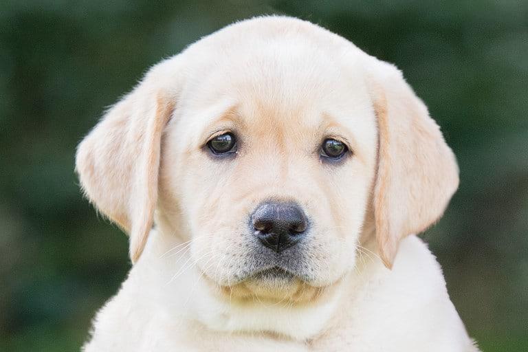 Sponsor a Puppy Luna