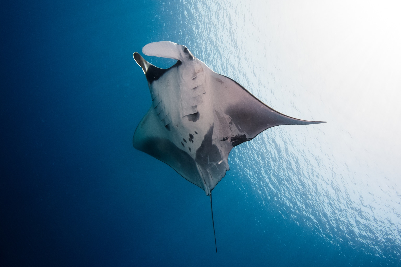 Help Manta Trust with a charity gift